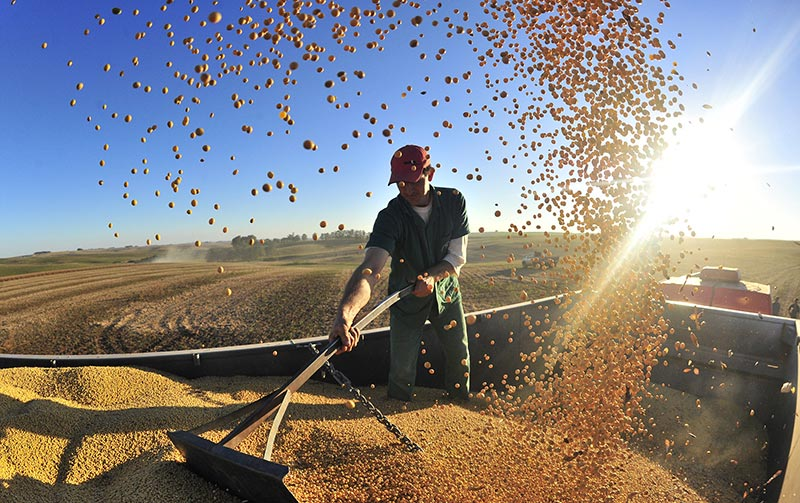certificadora de grãos
